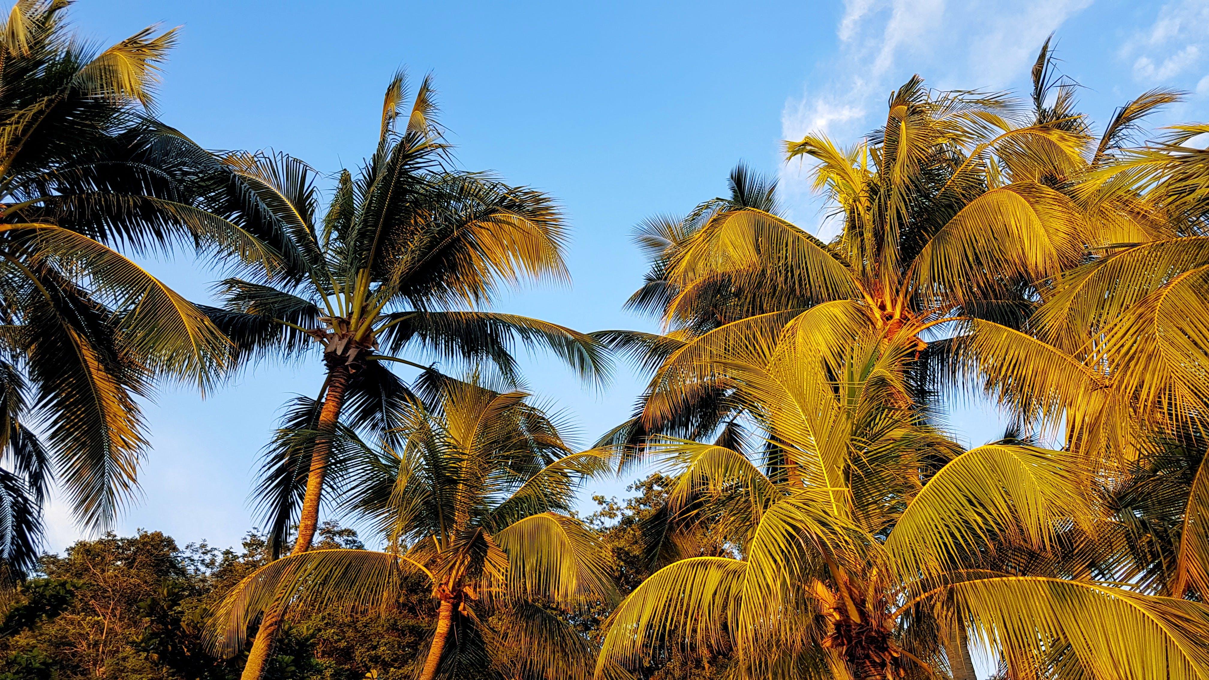 Gratis lagerfoto af dagslys, himmel, kokostræer, landskab