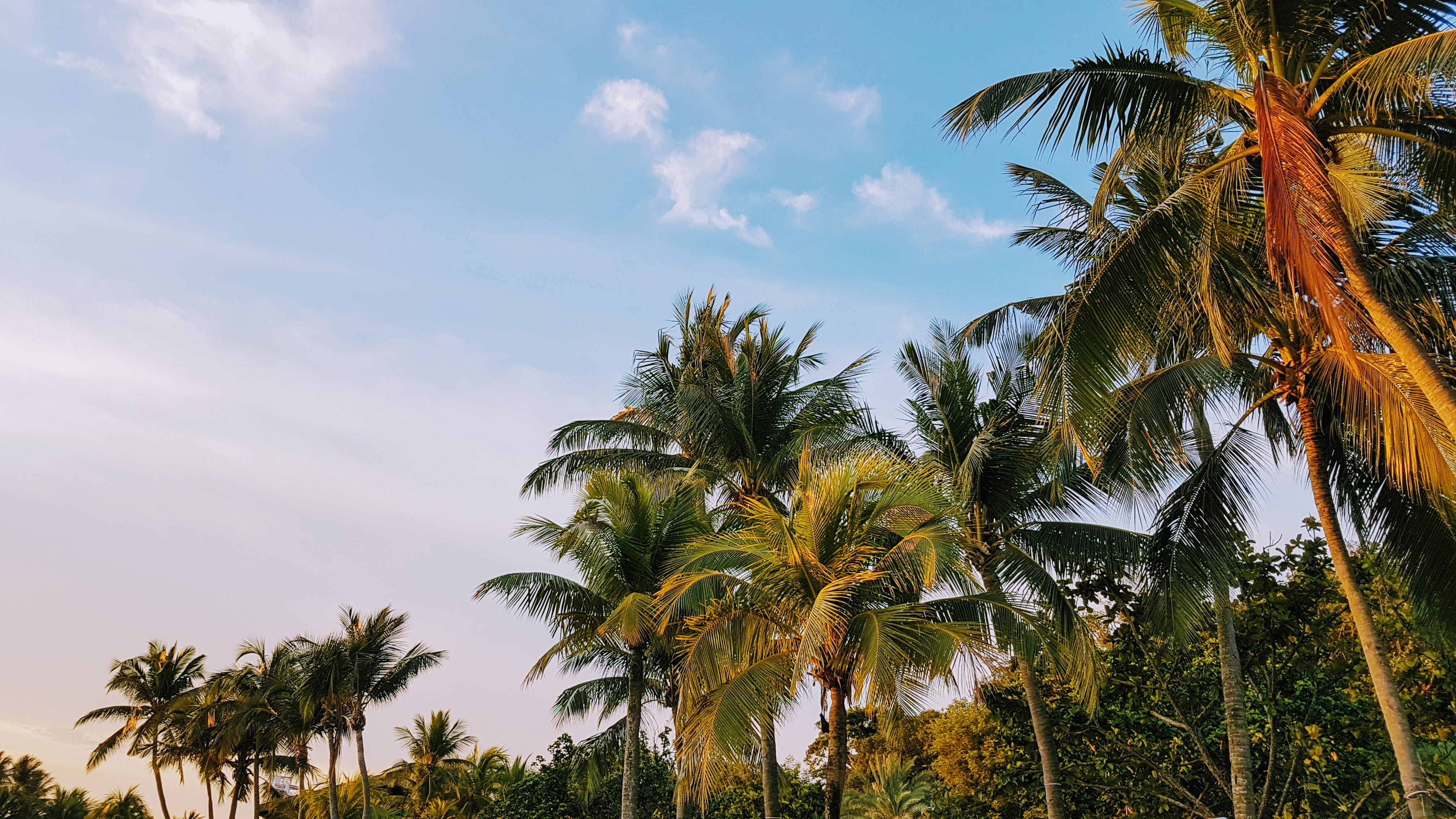 Photos gratuites de arbre, bord de mer, cocotiers, complexe
