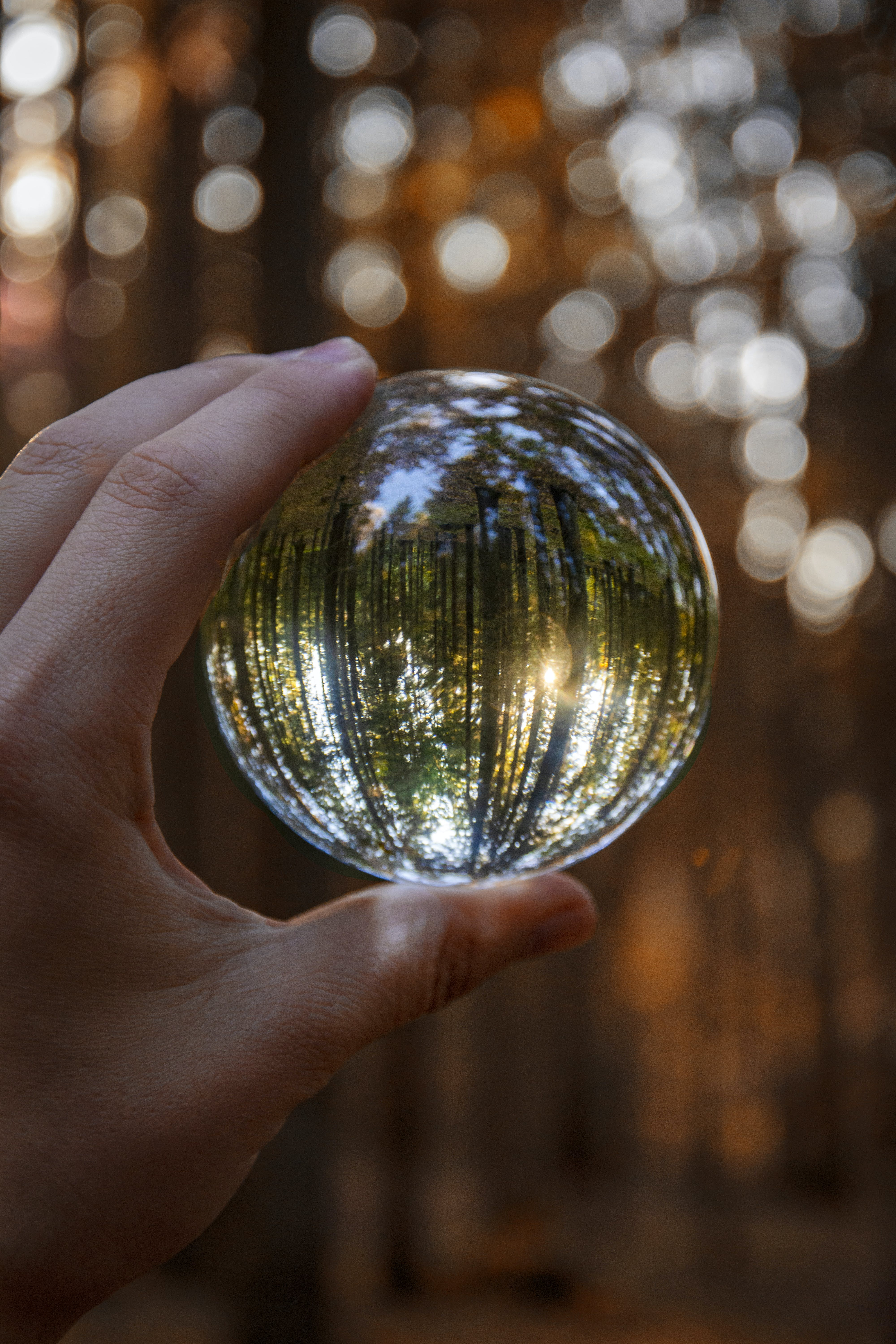 Closeup Photography of Person Holding Glass Globe