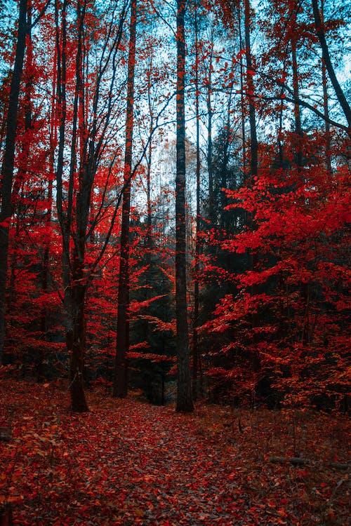 Gratis stockfoto met bladeren, bomen, Bos, bos achtergrond