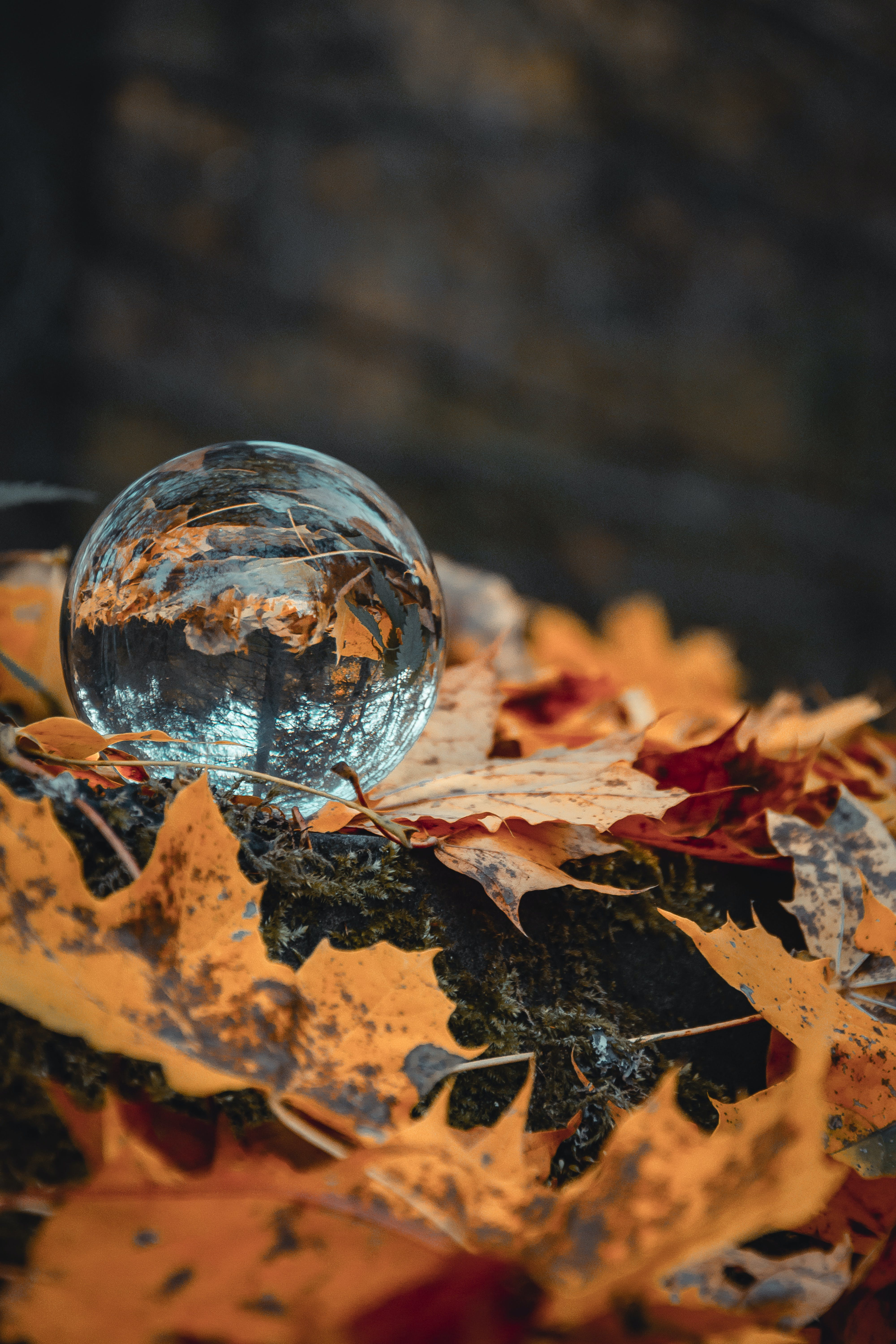 Round Clear Ball on Maple Leaves