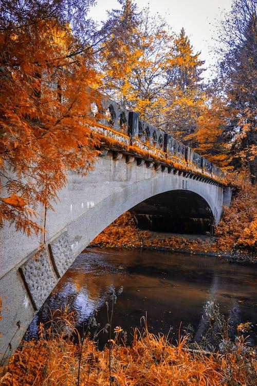 Grey Concrete Bridge Over River