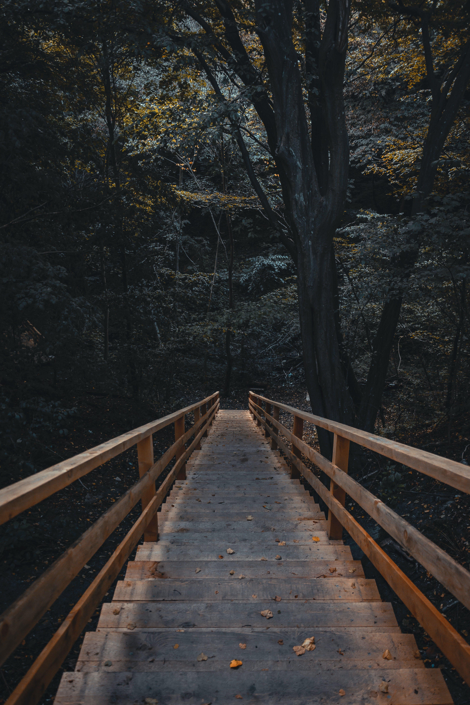 Základová fotografie zdarma na téma dřevěné schody, dřevěný, dřevo, les