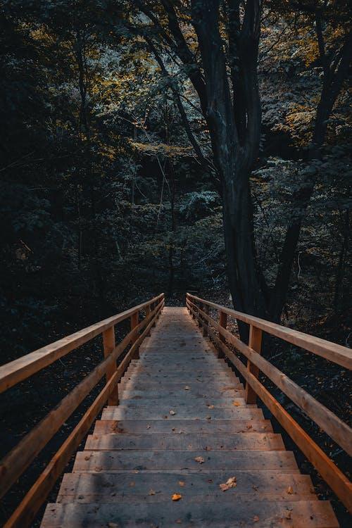 Бесплатное стоковое фото с дерево, деревья, деревянная лестница, деревянный