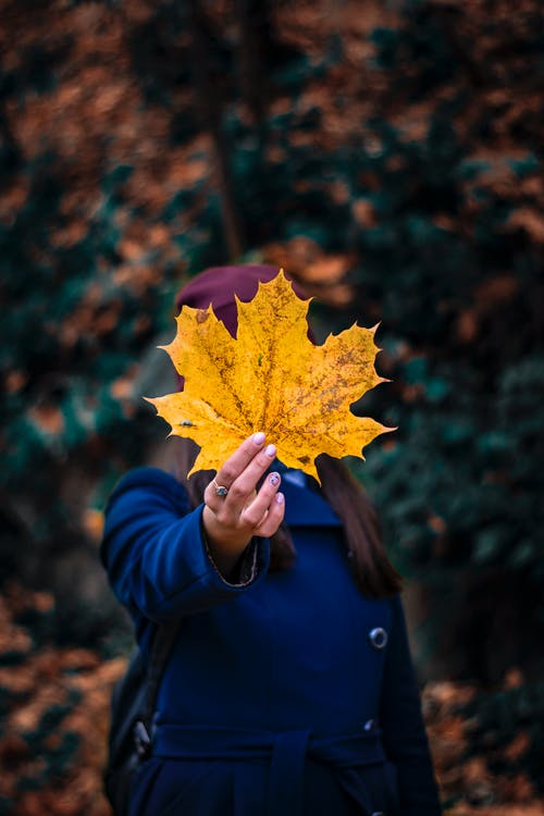 Photo of Person Holding Yellow Leaf