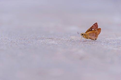 Бесплатное стоковое фото с бабочка, животное, земля, зима