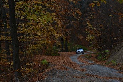 Foto stok gratis hutan, jalan, jatuh, kendaraan