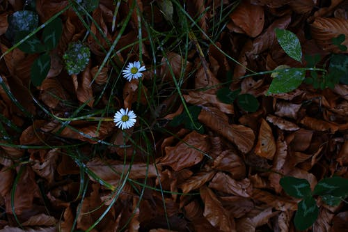 微妙, 植物群, 漂亮, 濕 的 免費圖庫相片