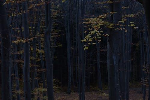 Ağaç dalları, ağaçlar, çevre, doğa içeren Ücretsiz stok fotoğraf