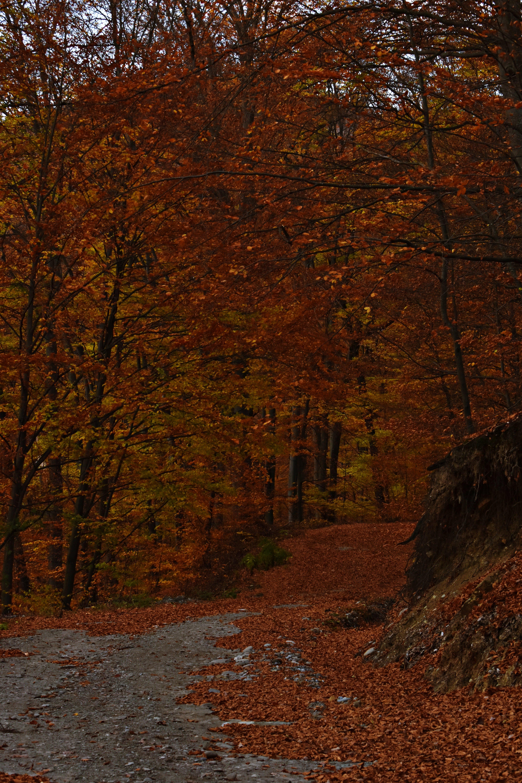 分支機構, 天性, 季節, 枯葉 的 免费素材照片