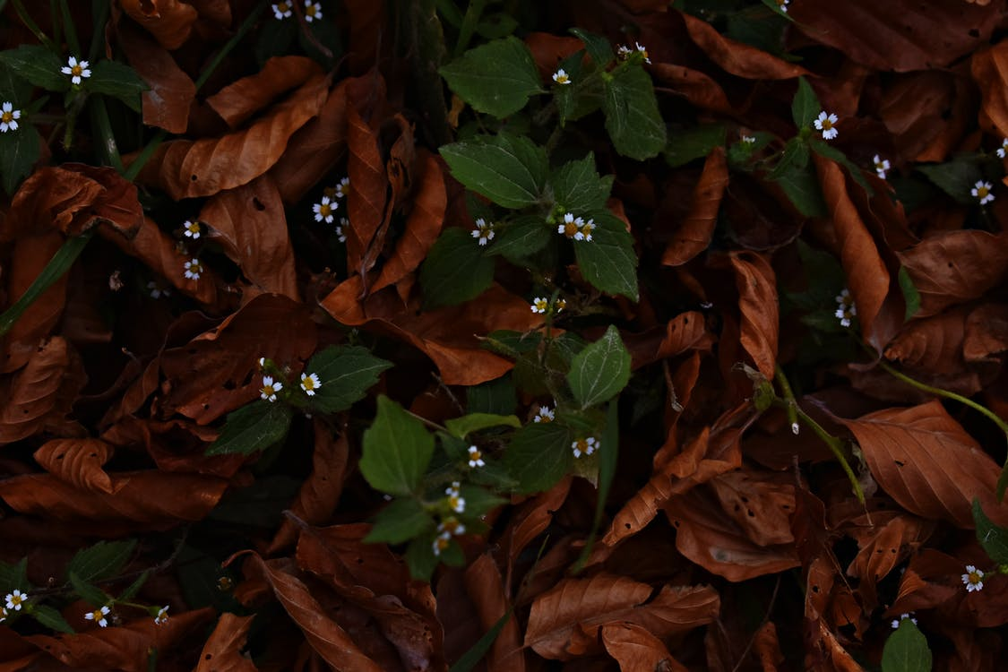 Photo of Dry Leaves Near Green Leaves