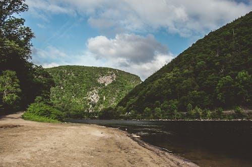 Foto profissional grátis de ao ar livre, beira-rio, natureza, verde-escuro