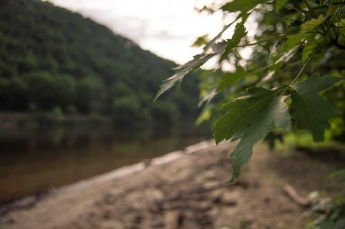 Foto profissional grátis de ao ar livre, beira-rio, luz natural, natureza