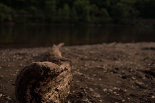 Foto profissional grátis de ao ar livre, beira-rio, luz natural, madeira escura