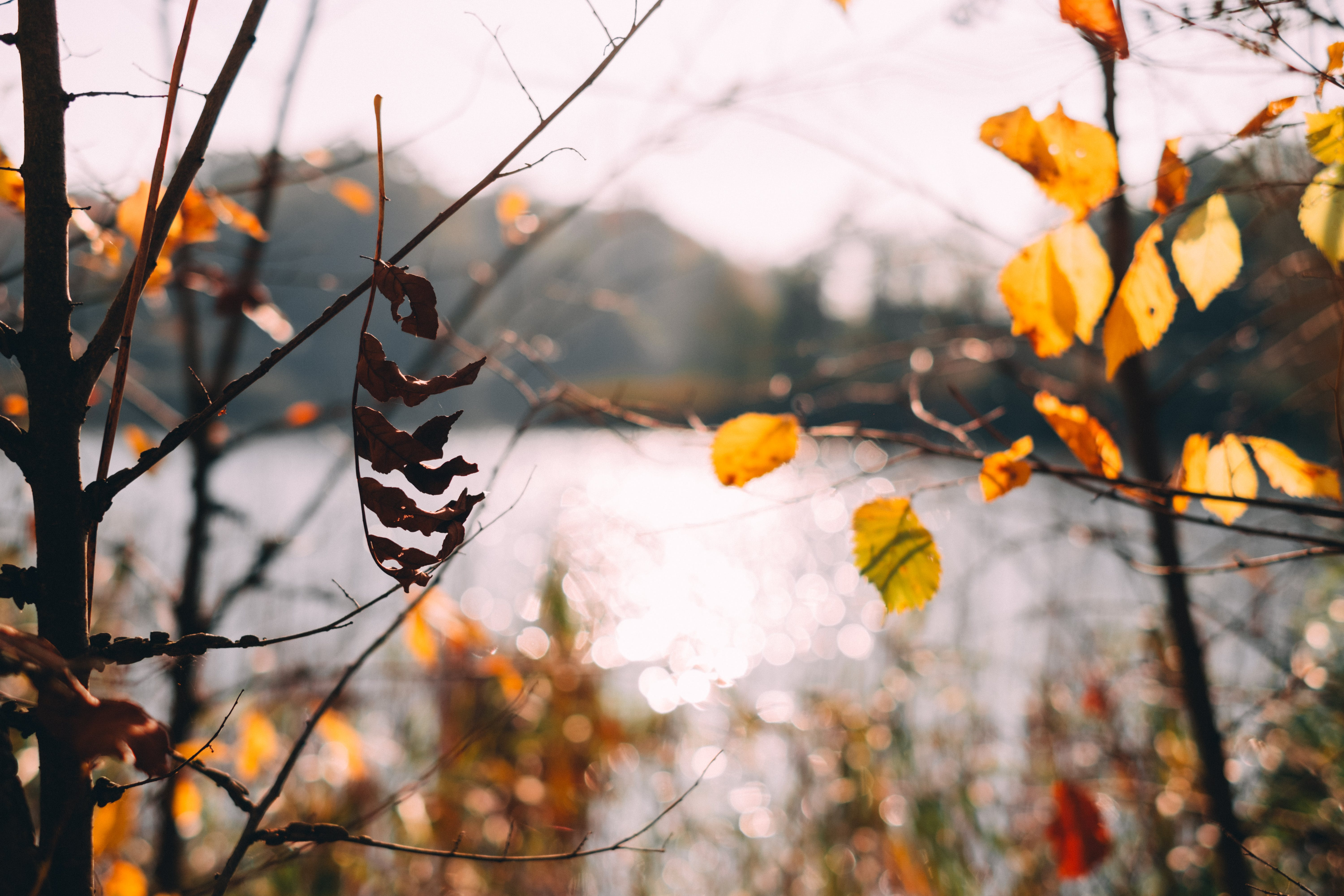Close-up Photography of Brown Leafed Trees Near Calm Water