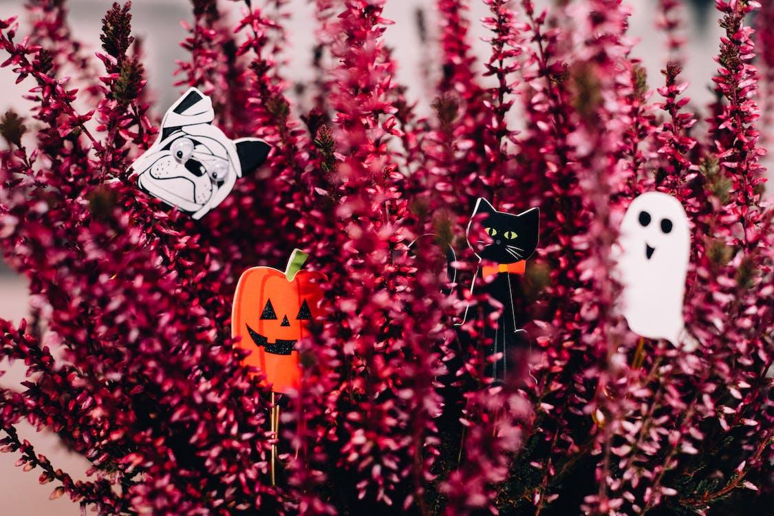 czarny kot, duch, flora