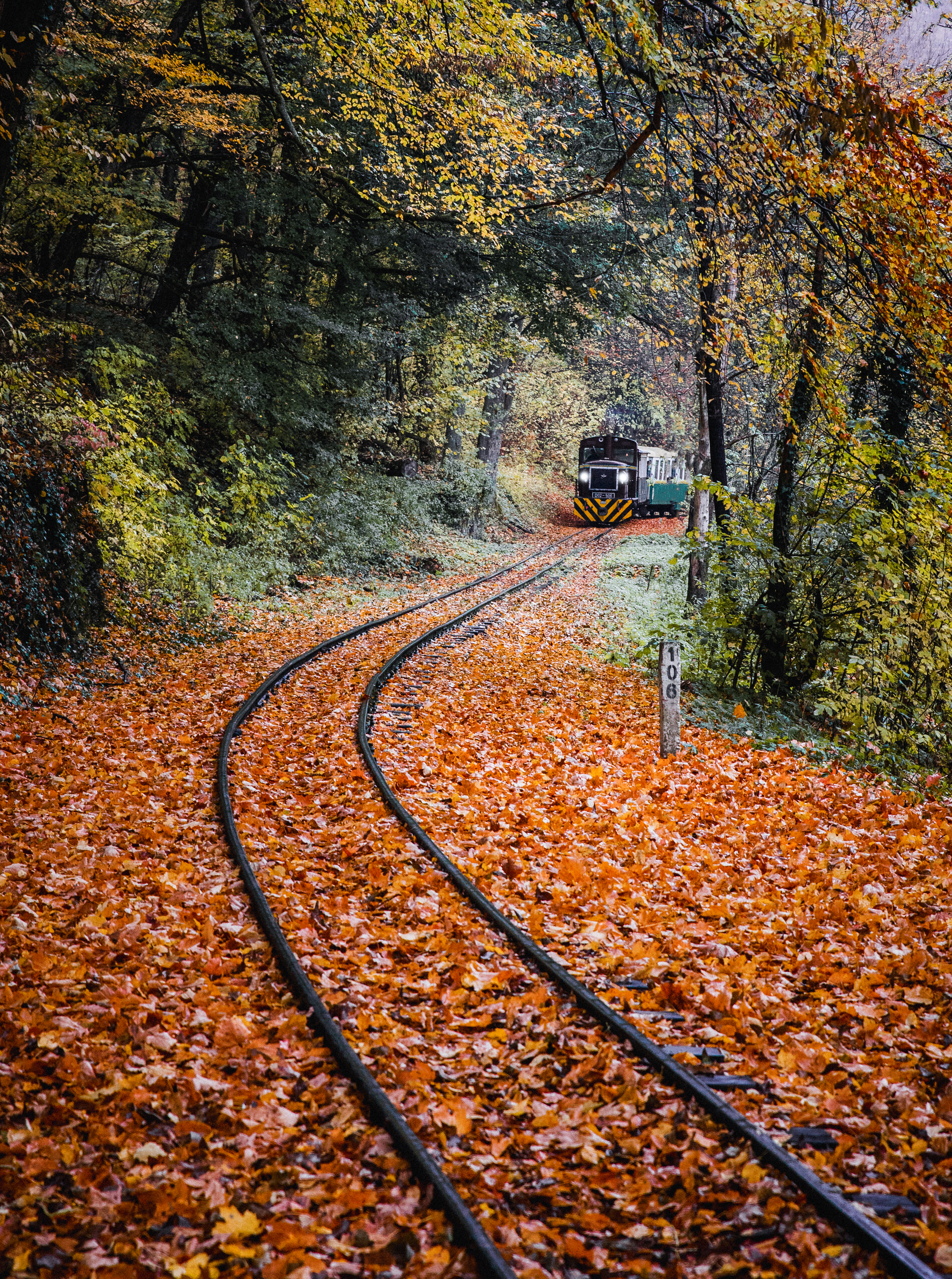 Green Train Surrounded by Trees