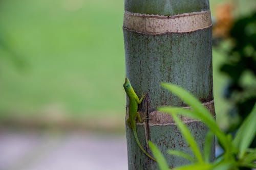 Green Reptile On Bamboo Tree