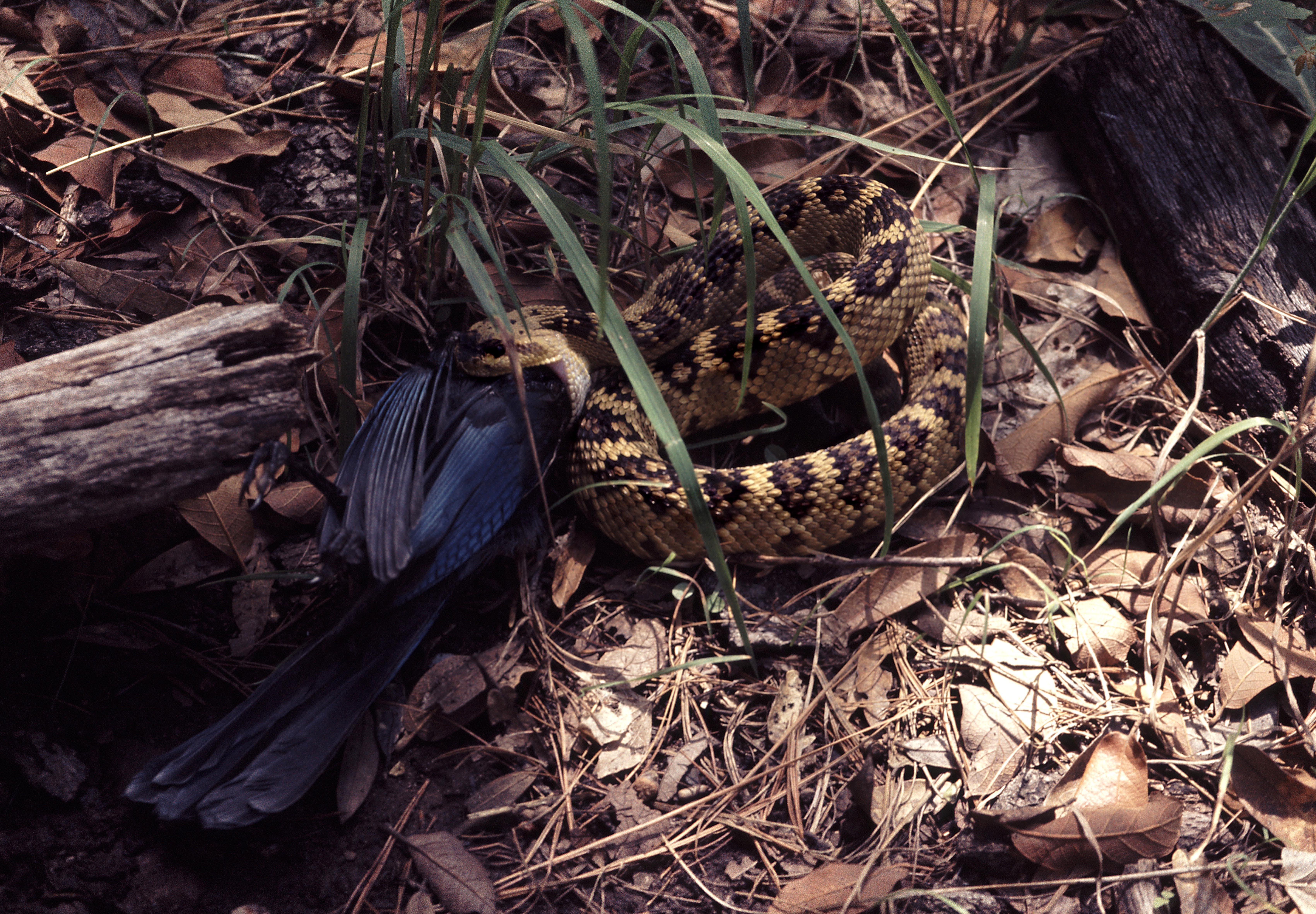 Brown and Black Python on Ground