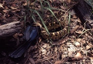 animal, reptile, outdoors