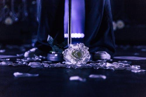 Základová fotografie zdarma na téma 4k tapeta, bílá květina, flóra, jemný
