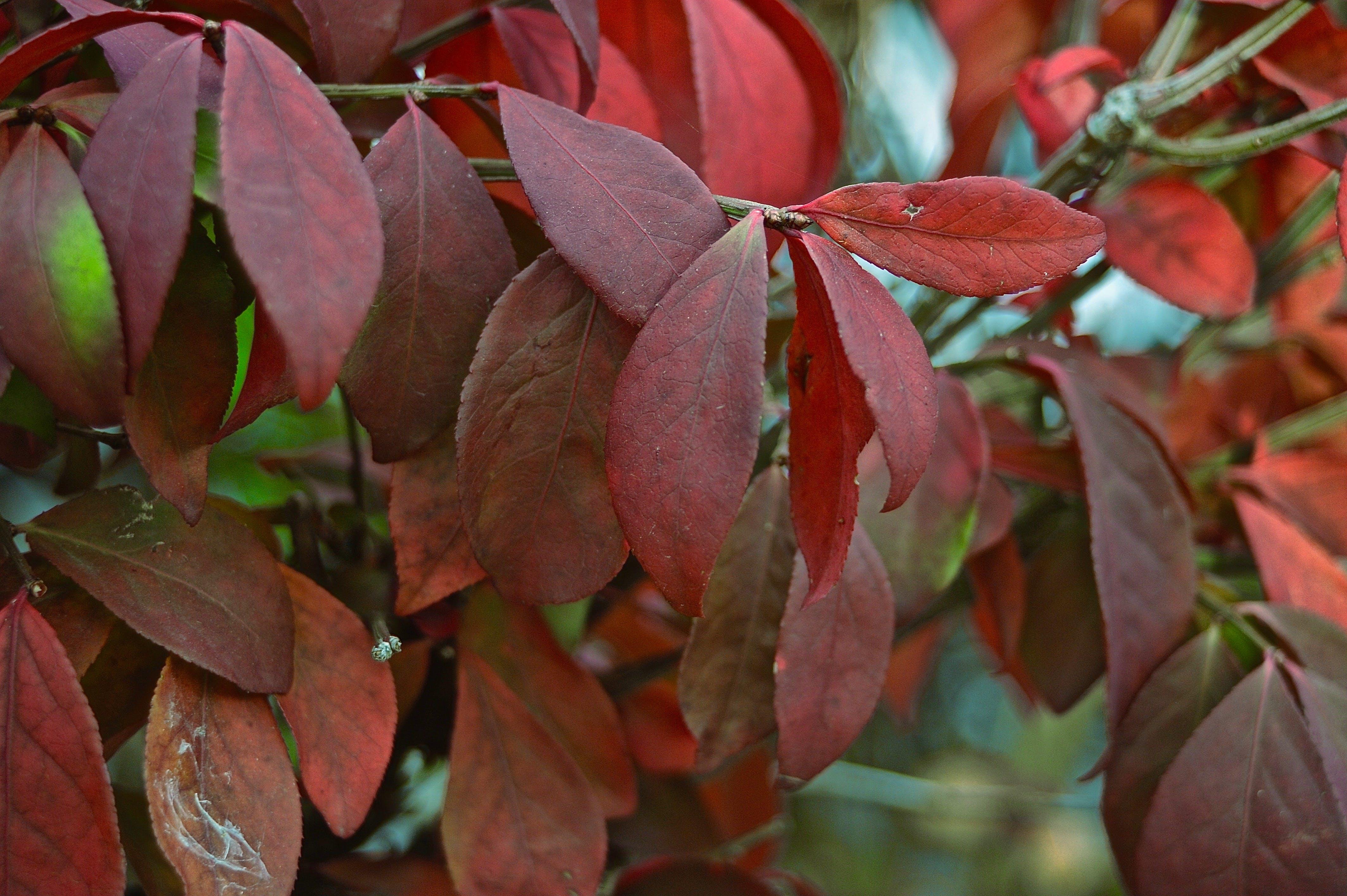 Kostenloses Stock Foto zu rote blüten