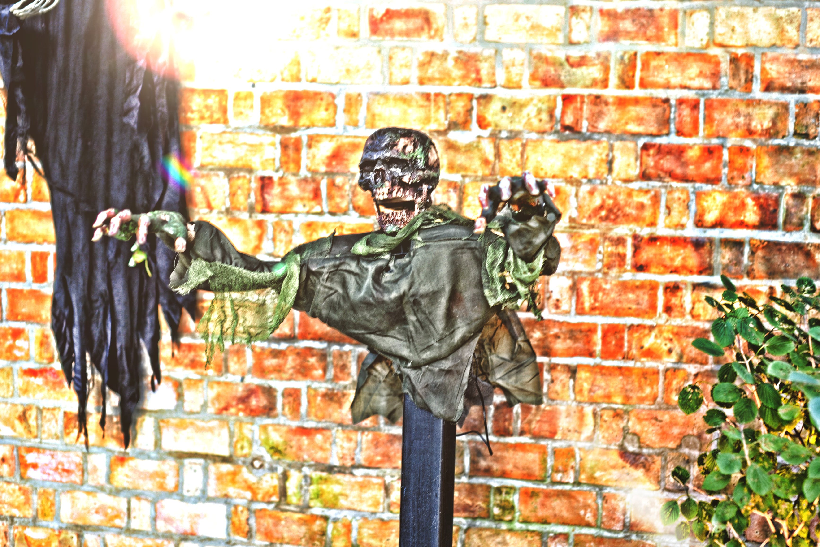 Kostenloses Stock Foto zu halloween