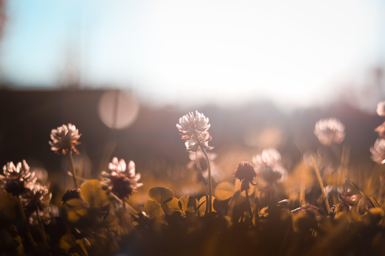คลังภาพถ่ายฟรี ของ กลางวัน, กลีบดอก, ดอกไม้, พื้นหลังเบลอ