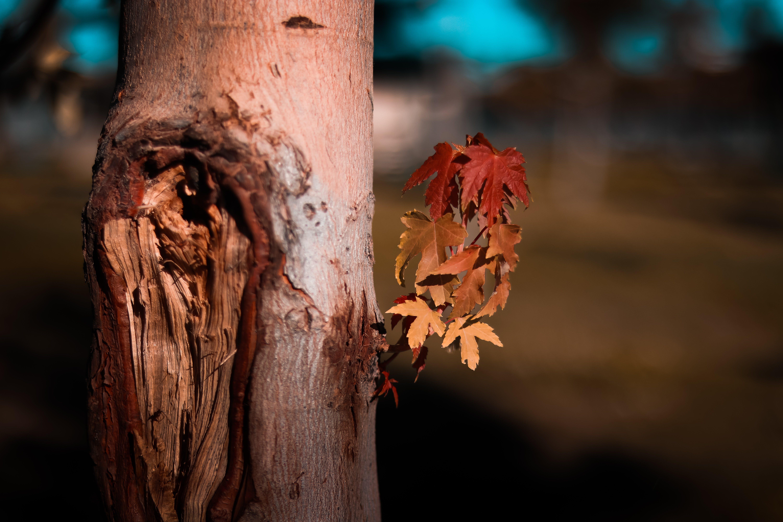 Fotos de stock gratuitas de árbol, bañador, corteza, efecto desenfocado