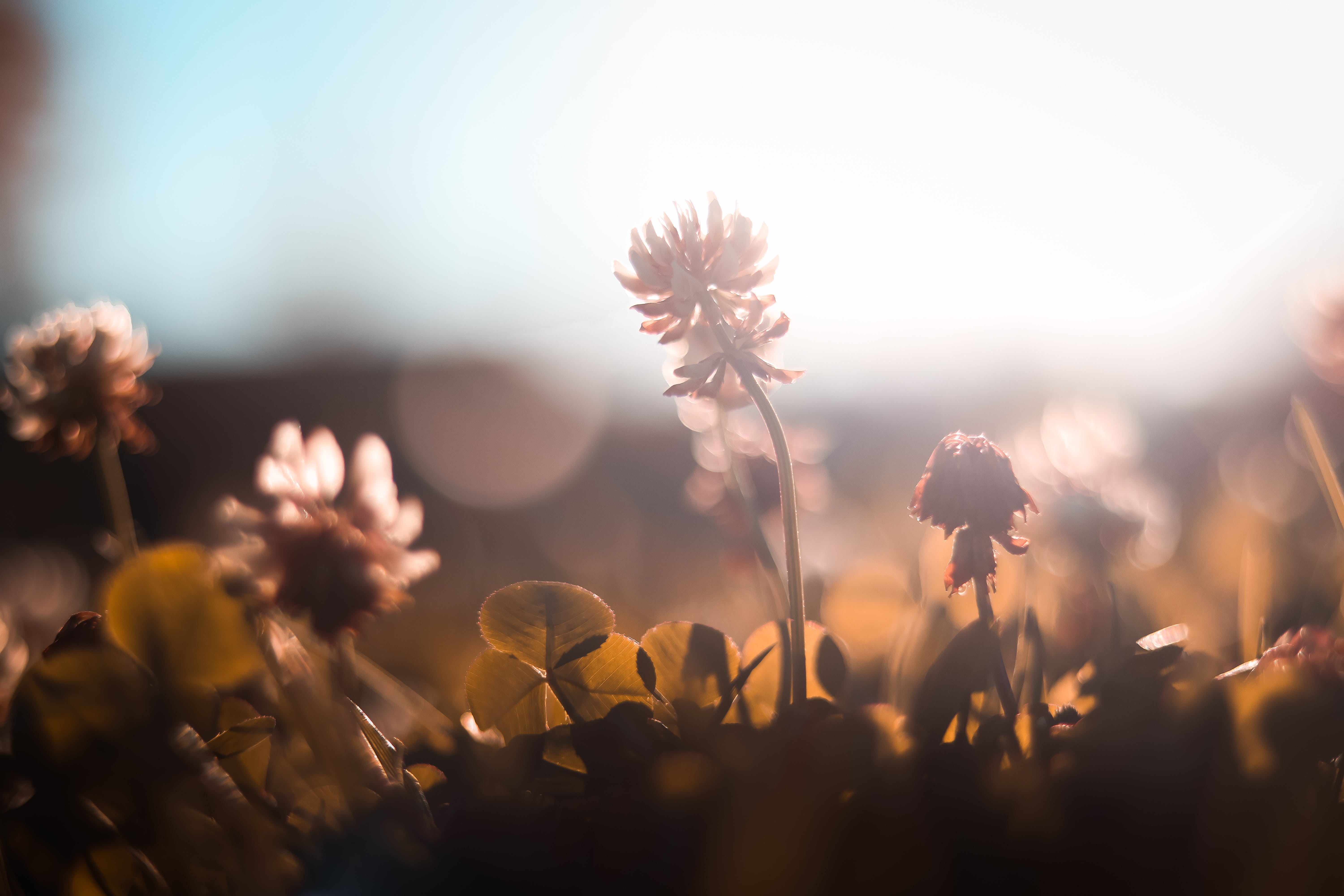 Selective Focus Photography of Flower Under Sunlight