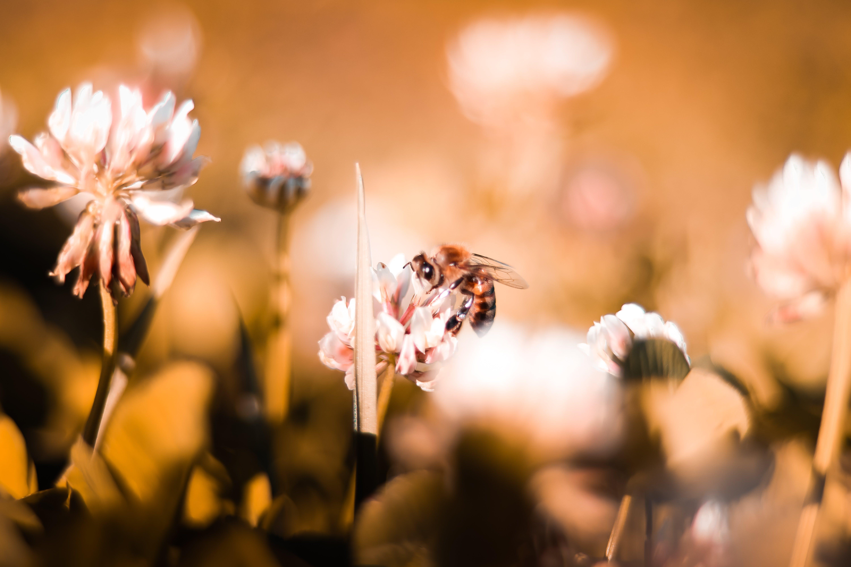 Kostnadsfri bild av bi, blommor, blomning, delikat