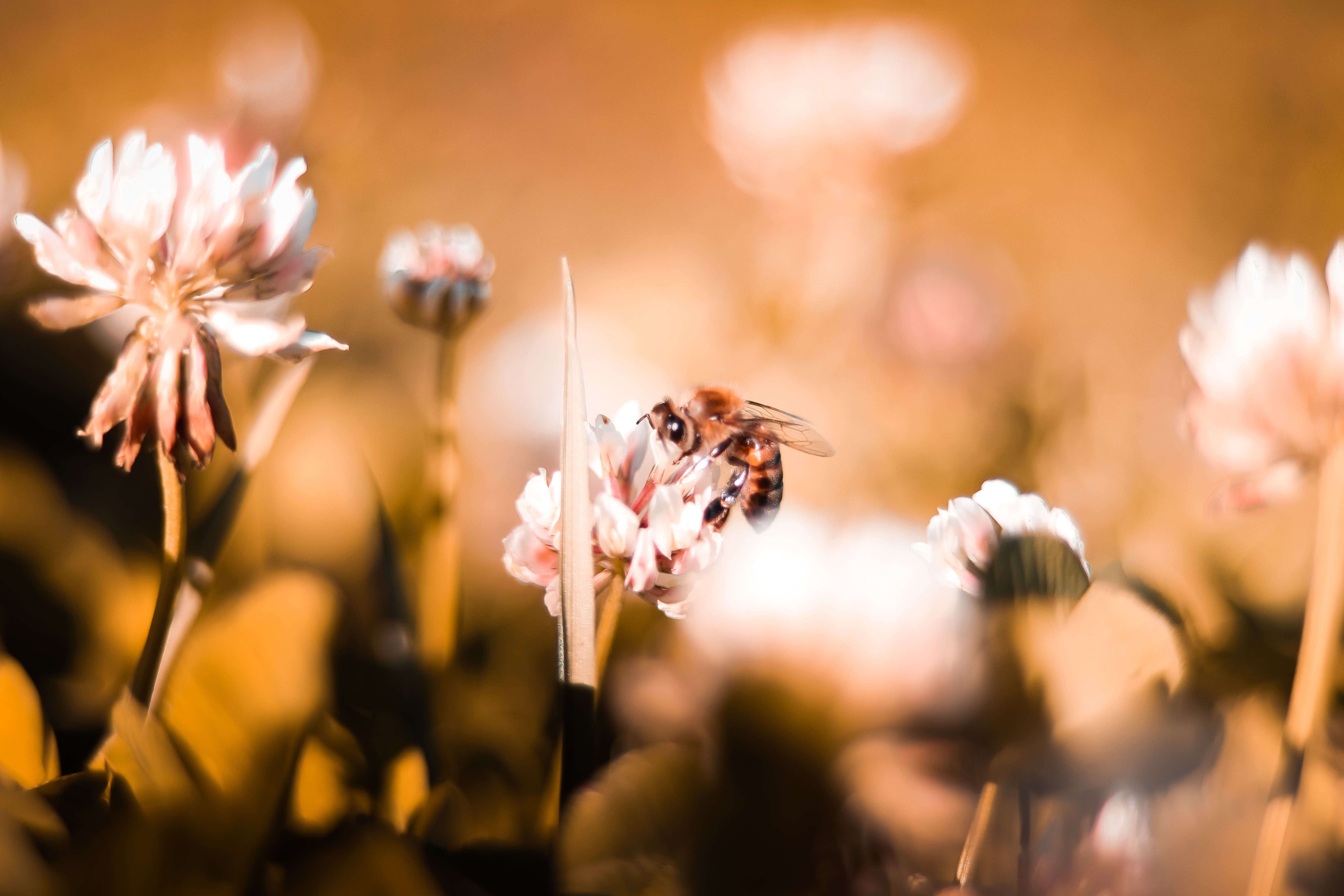 Macro Photography of Bee Perched On Flower