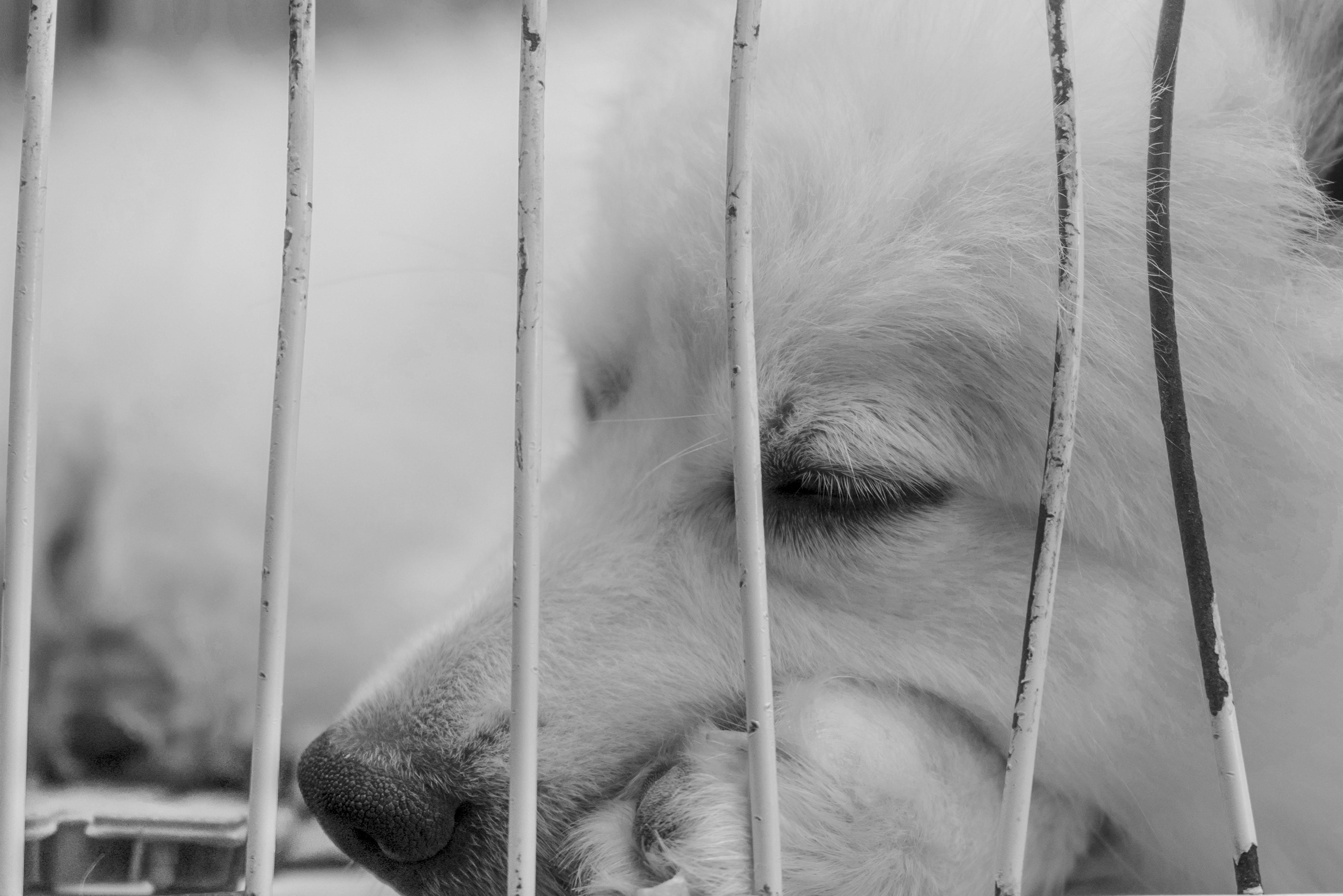 Kostenloses Stock Foto zu hund, nahansicht, schlaf, schwarz und weiß