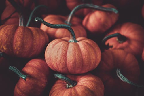 Selective Focus Photo Of Pumpkins