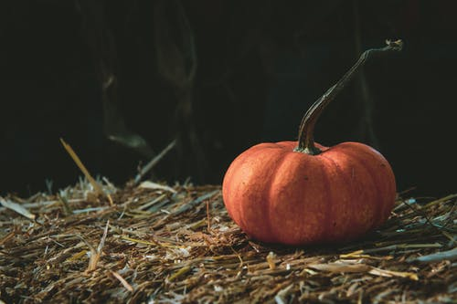 Closeup Photography of Orange Pumpkin on Brown Grass