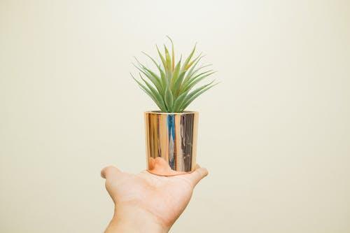 Foto profissional grátis de aumento, close, crescimento, dentro de casa