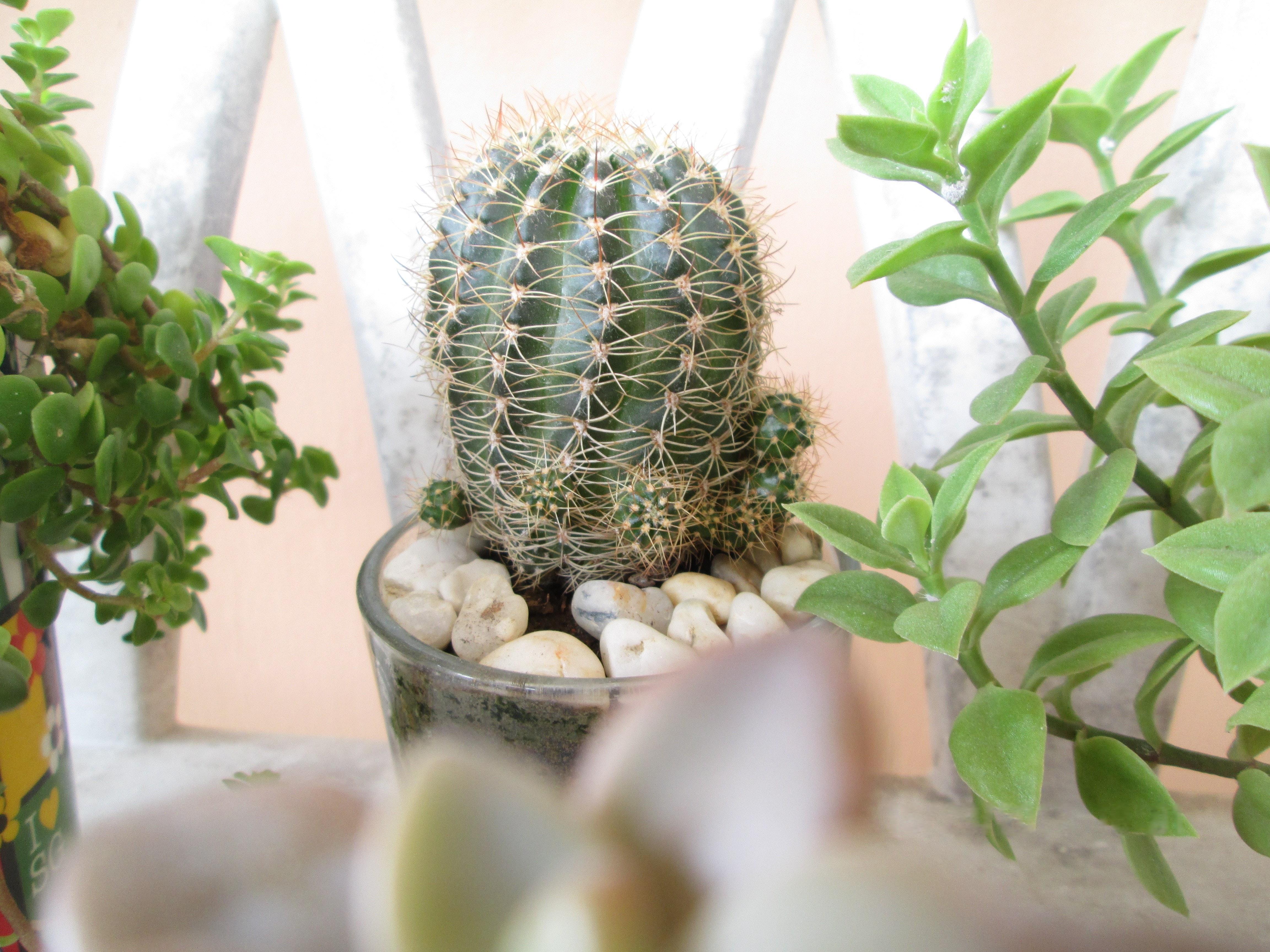 Wallpaper Tumblr Bilder Kaktus - Images | Slike