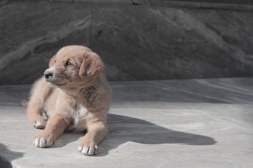 Бесплатное стоковое фото с ача кутта, ганда кутт, животные, играющая собака