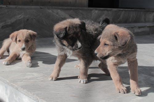 Бесплатное стоковое фото с ача кутта, ганда кутта, животные, играющая собака
