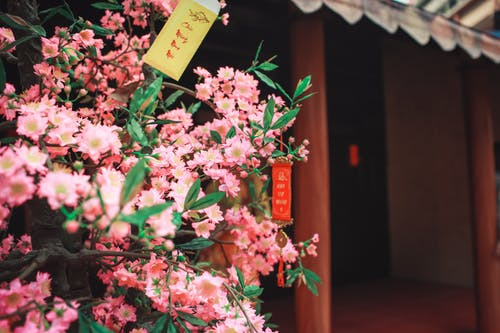 Selective Focus Photography of Pink Petaled Flowers Beside Temple