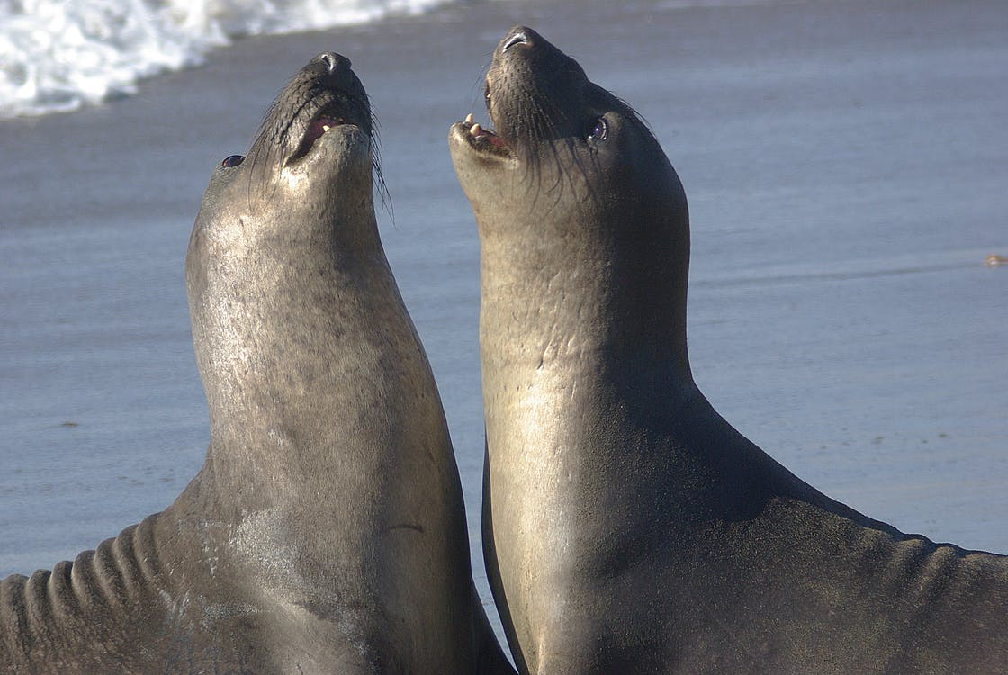 2 Seal Lions on Shore