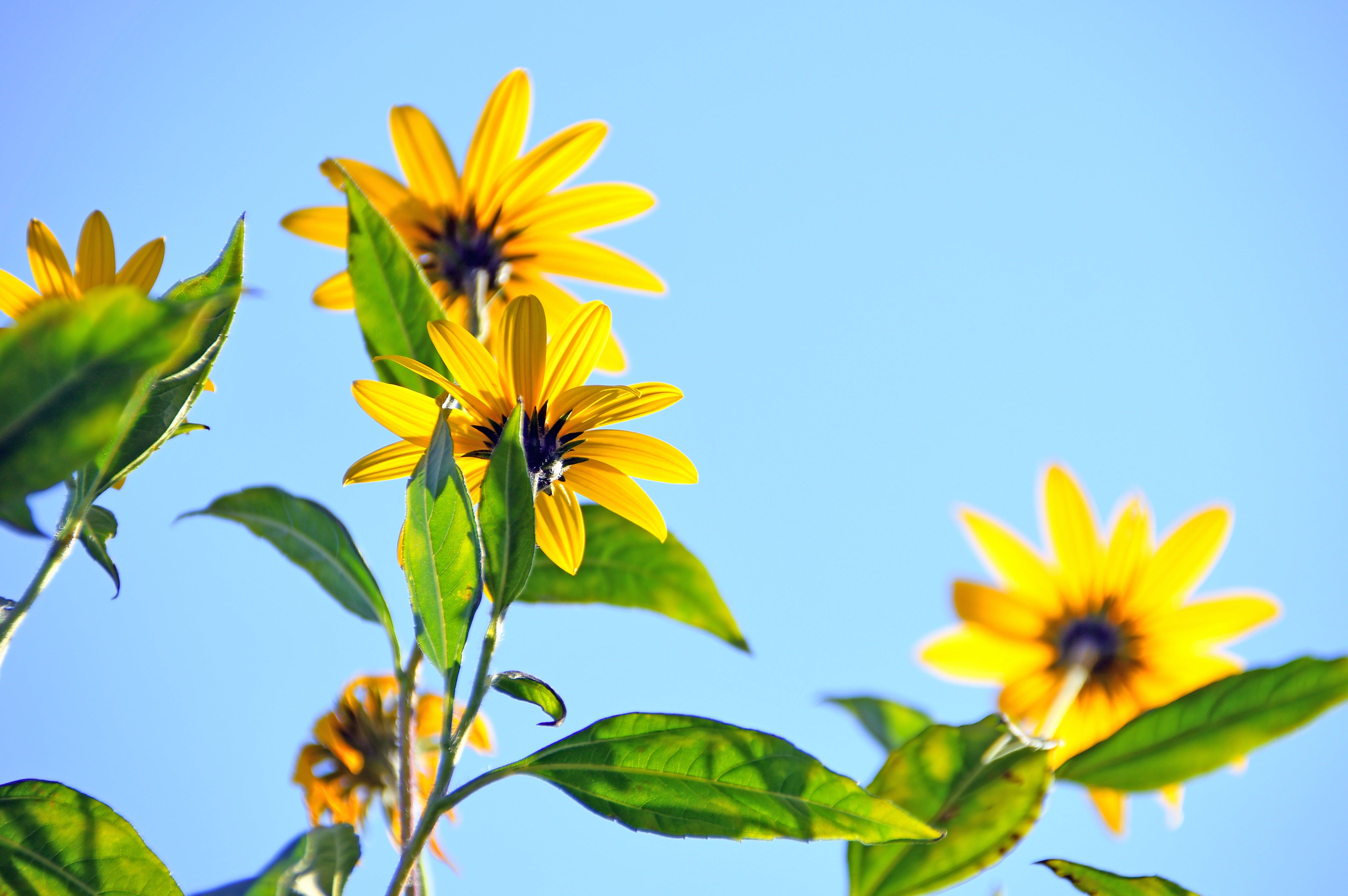 Foto stok gratis alam, berbunga, bidikan sudut sempit, bunga-bunga
