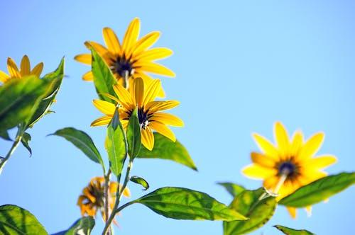 Foto profissional grátis de amarelo, aumento, brilhante, close
