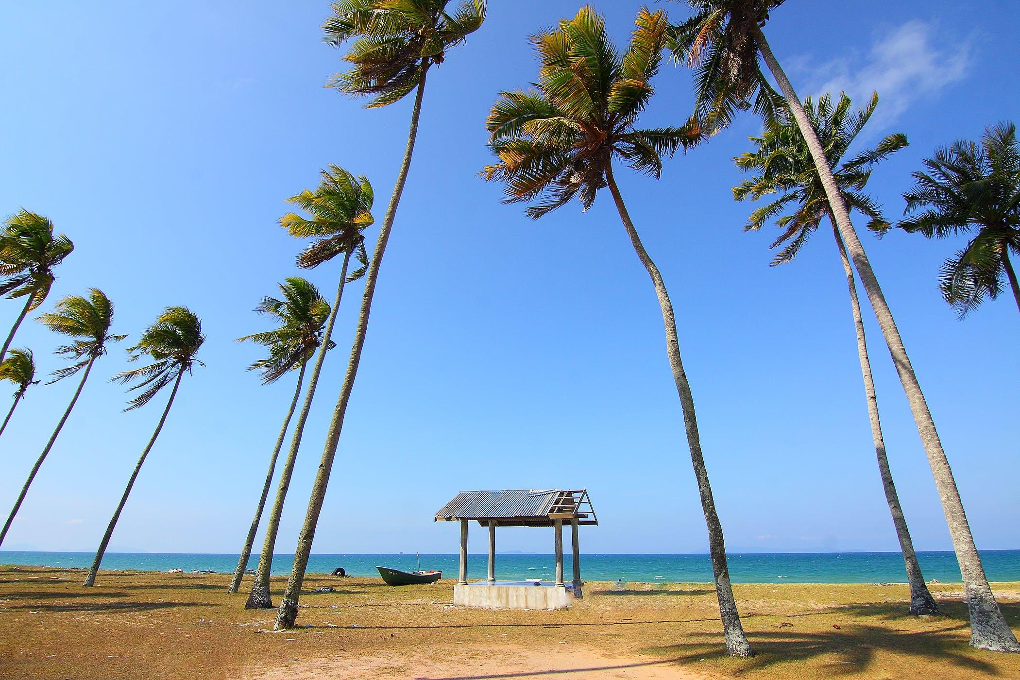 Coconut Trees Near Shoreline