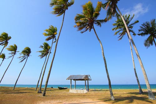 Coconut Trees Near Shoreline