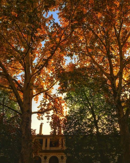Foto stok gratis cerah, Hongaria, lampu, langit