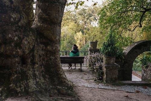 Immagine gratuita di abbracciando, albero, amore, coppia