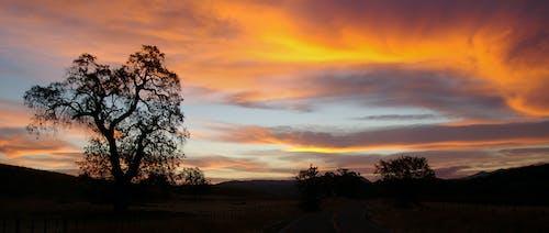 açık, ağaç, akşam, altın saat içeren Ücretsiz stok fotoğraf