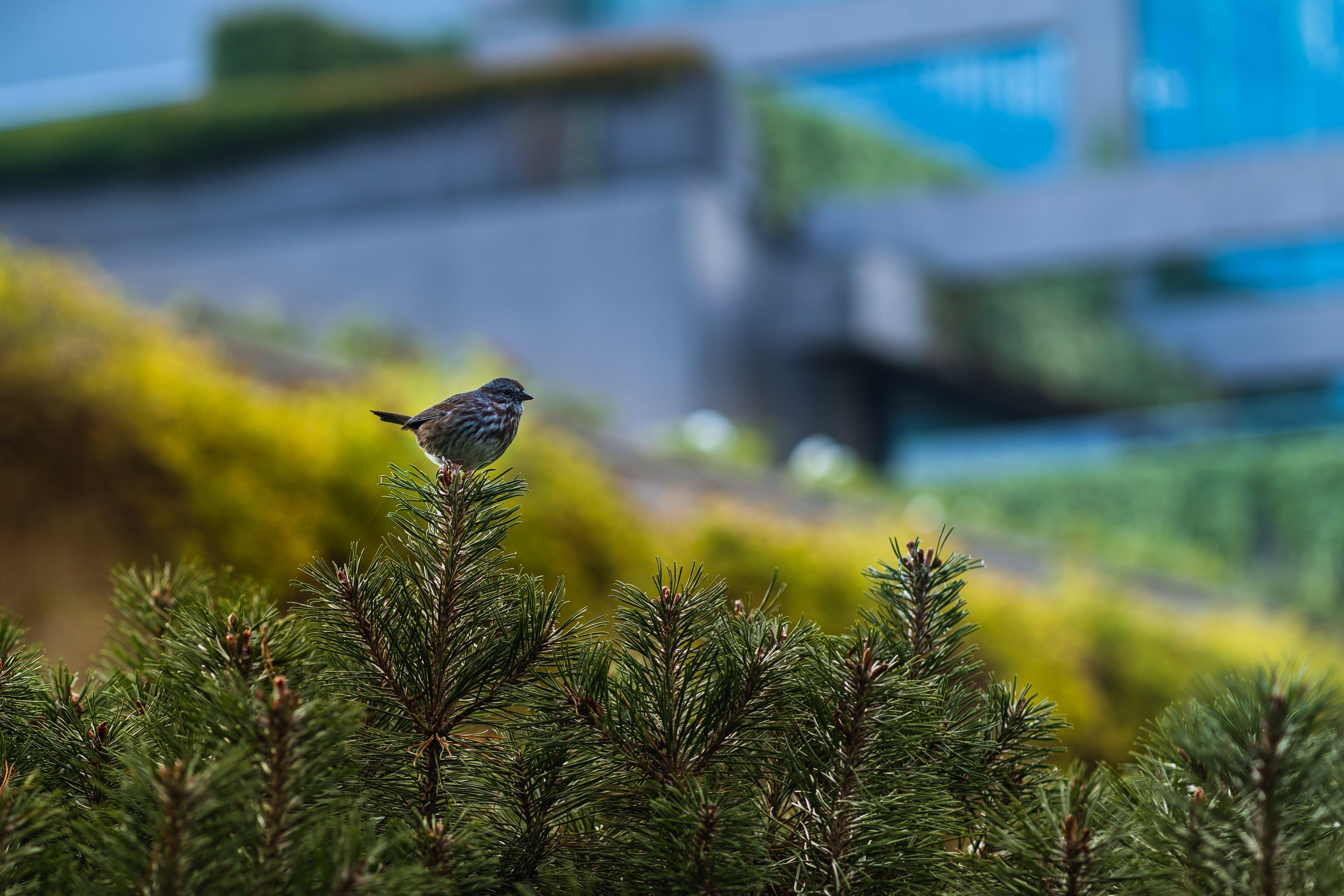 Free stock photo of bird, bokeh, green, nature