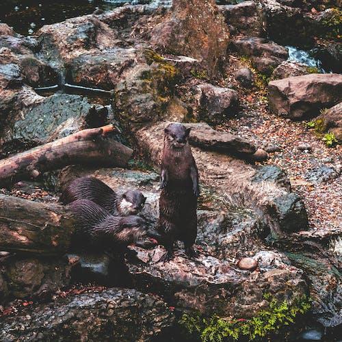 Kostnadsfri bild av däggdjur, djurpark, utter, vilda djur och växter